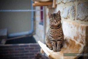 kattenpension-heuvelland-fotoshoot-katten-fotostudiolimburg.com