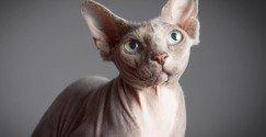 fotostudio-limburg-fotoshoot-huisdier-kat-hond